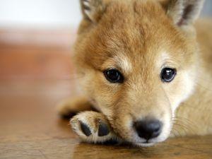 A cute dog