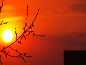 The sun and the tree branch