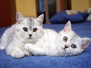 Two beautiful cats