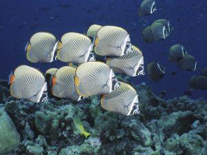 School of Fish gray colored