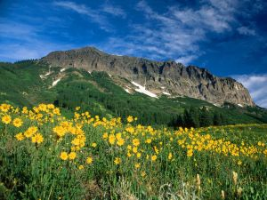Yellow flowers under the mountain