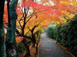 Autumn Colors, Kyoto, Japan