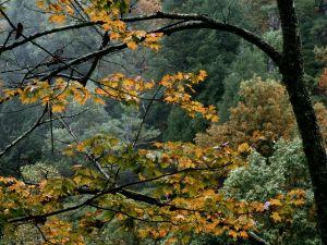 Autumn trees wet with rain