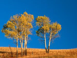 Autumn trees under a blue sky
