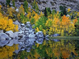 The autumn reflected in water