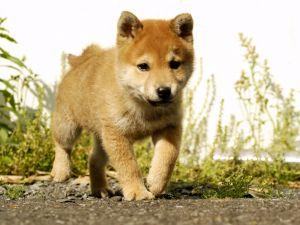 A puppy in the garden