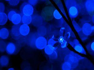 Light blue flower shaped