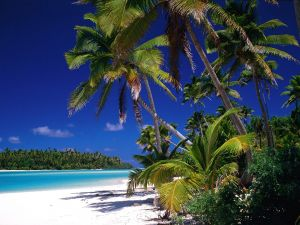 Nice beach with many palm trees