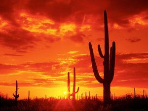 Sunset in Saguaro National Park, Arizona