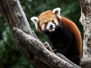 A red panda above the trunks