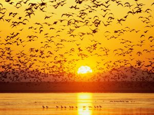 Birds over the lake at sunset