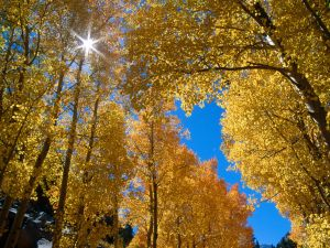 The brightness of the sun between the leaves of trees