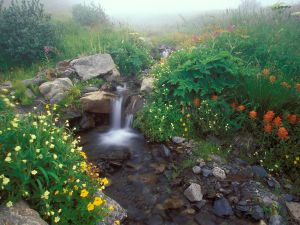 Plants and flowers in the small waterfall