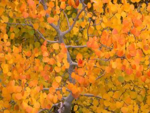 Tree with beautiful autumnal leaves