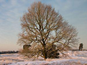 Tree on a snowy ground