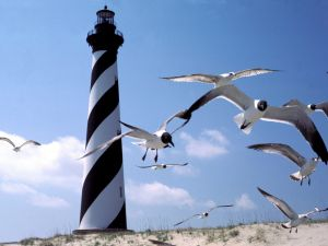 Lighthouse and gulls at Cape Hatteras, North Carolina