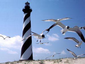 Lighthouse and gulls at Cape Hatteras, North Carolina