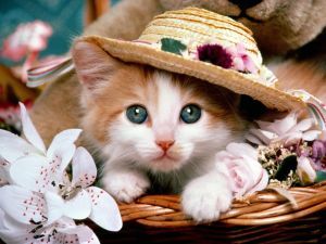 Kitten with hat