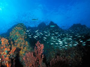 Fish swimming among the coral