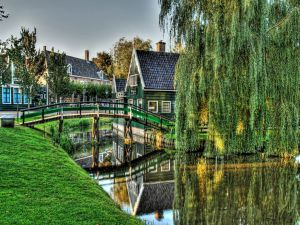 Wooden bridge and a large weeping willow