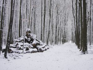 Snowy road between the trees