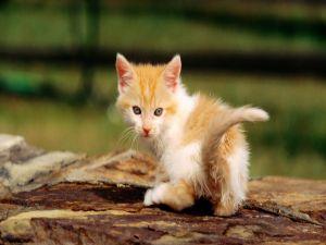 Kitten looking back