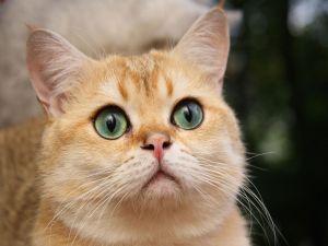 A observer cat