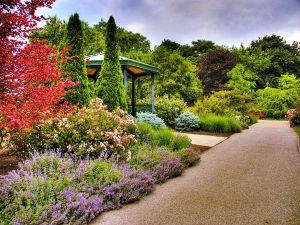 Nice garden in the park