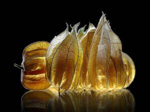 Fruit peels lit