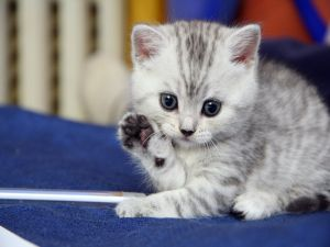 Look at the little paw