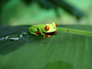The green frog and the ant