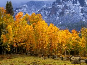 Mountains and trees in autumn