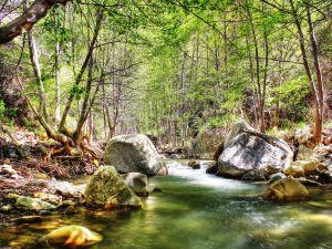 A river between trees