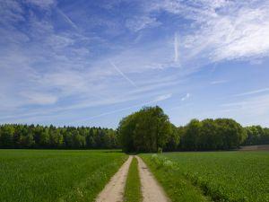 Dirt road in green surroundings