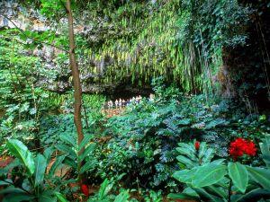Visit to Fern Grotto, Kauai, Hawaii