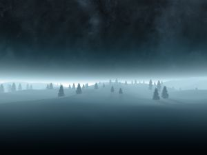 Trees in the dark of night
