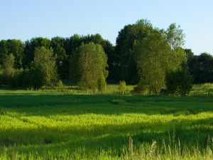 Green trees over green grass
