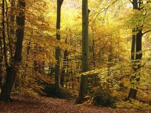 Forest with autumnal trees