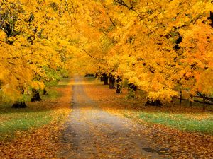 Road covered with autumnal leaves