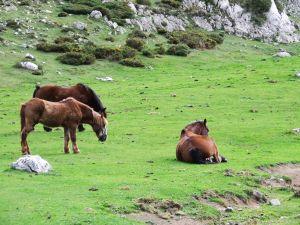 Horses in Asturias