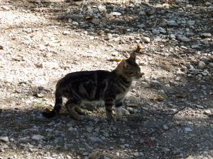Kitten in an Asturian village