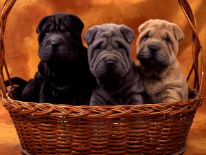 Three dogs on the basket