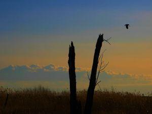 Tree trunks broken and bird in the sky