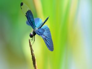 Dragonfly over a twig