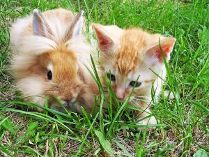 A cat and a rabbit on the grass