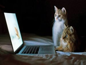Two attentive cats looking at computer