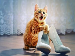 Scared kitten with a pair of shoes