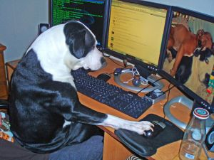 A dog viewing photos on the computer