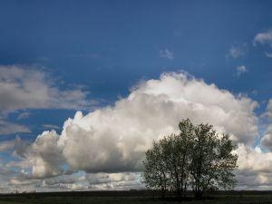 Big white cloud and a tree