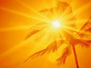 The sun, the palm tree and an orange sky